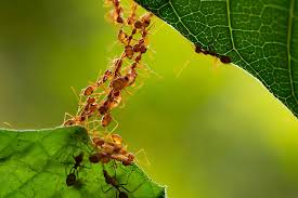 Antsworking